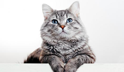 photo d'un chat