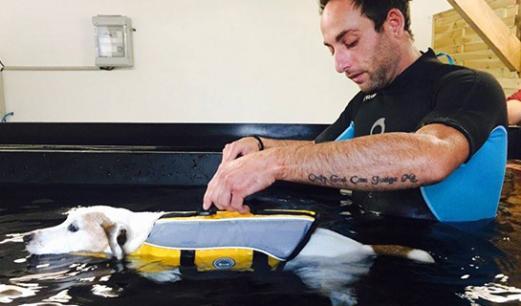 Rééducation d'un chien par l'hydrothérapie